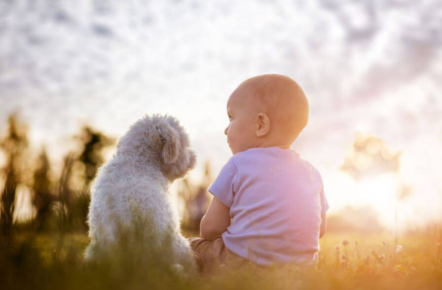 don't force your child to make relation with your pet