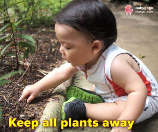 To keep baby safe keep him away from plants
